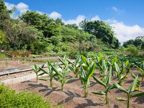 薬草園風景